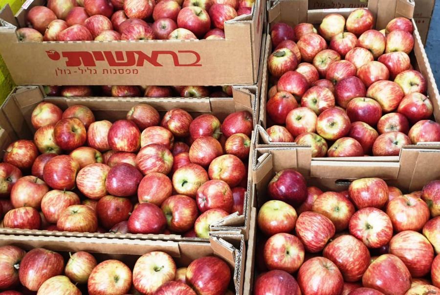 תפוחים בבית האריזה