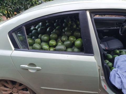 מכונית עמוסה פרי גנוב