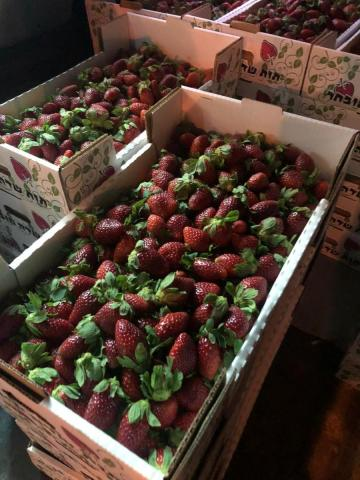 סיכול הברחת תותים