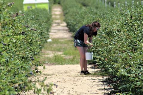 עובדים בחקלאות