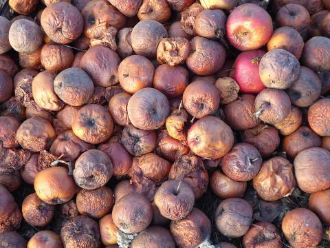 פירות רקובים