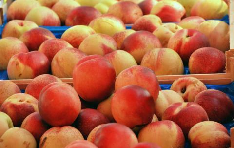 פירות בשוק