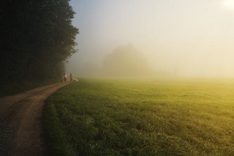 שדה ירוק