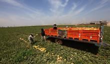 עובדים בשדה בעוטף עזה