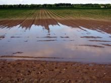שדות בגשם