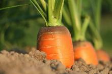 חקלאות-מתחדשת