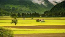 שטחים חקלאיים