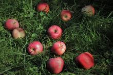 פירות זרוקים