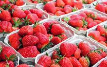 תותים מעזה שנמכרו כתותים מישראל