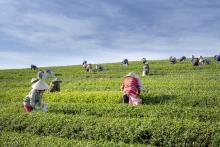 עובדים בשדה