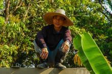 עובד תאילנדי